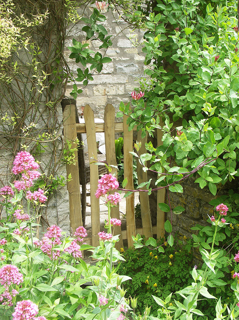 Sweet Chestnut, flowers and shrubs- the perfect combination