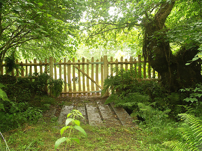 Woodland chestnut picket fencing and gate viewed from the rear