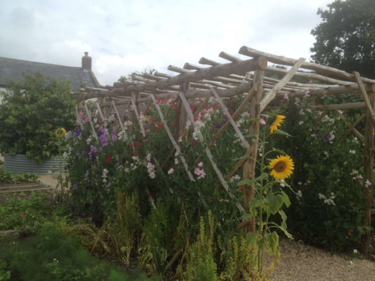 Sweet Chestnut Rose Arch, Fencing and Gate